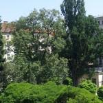Bergahorn und Eiche im Garten von Dinghoferstraße 4 (Ärztekammer)
