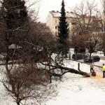 Rodung eines imposanten Kirschbaums im Garten von Mozartstraße 33