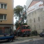 Vorbereitungen für die Fällung der Linde im Garten von Dinghoferstraße 5 (20.8.2014).
